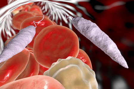Promastigotes of Leishmania parasite which cause leishmaniasis in blood with red blood cells and leukocytes, 3D illustration