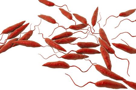 Promastigotes of Leishmania parasite which cause leishmaniasis isolated on white background, 3D illustration