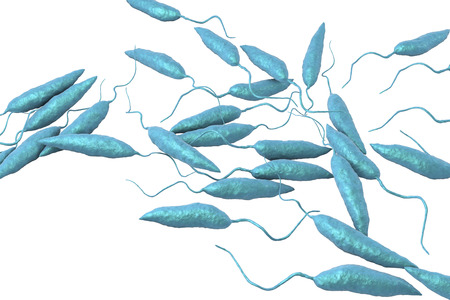 infectious disease: Promastigotes of Leishmania parasite which cause leishmaniasis isolated on white background, 3D illustration