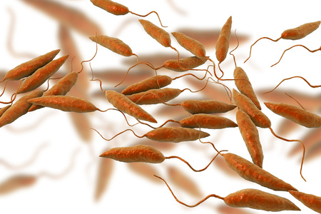 liver cells: Promastigotes of Leishmania parasite which cause leishmaniasis isolated on white background, 3D illustration