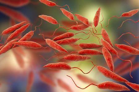 Promastigotes of Leishmania parasite which cause leishmaniasis, 3D illustration Stock Photo