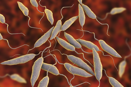 Promastigotes of Leishmania parasite which cause leishmaniasis, 3D illustration Stock Photo