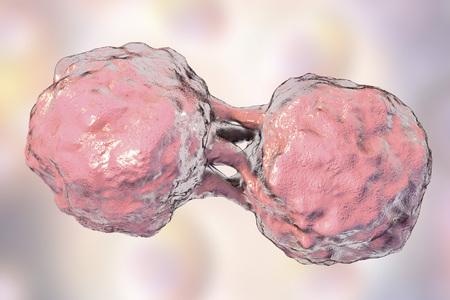 Dividing stem cells, 3D illustration. Research background