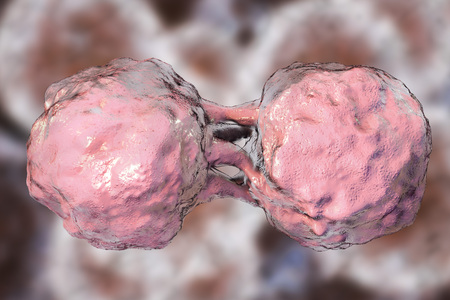Dividing stem cells, 3D illustration. Research background