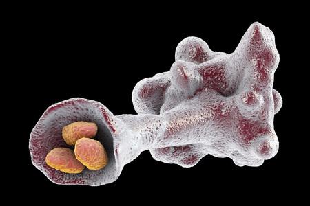 Amoeba protozoan engulfing bacteria isolated on black background, 3D illustration