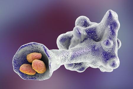Amoeba protozoan engulfing bacteria on colorful background, 3D illustration