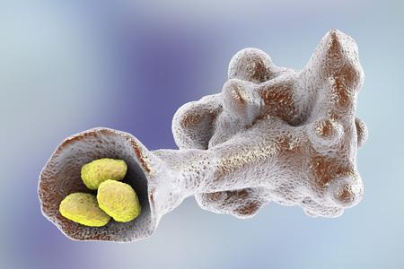 protozoan: Amoeba protozoan engulfing bacteria on colorful background, 3D illustration