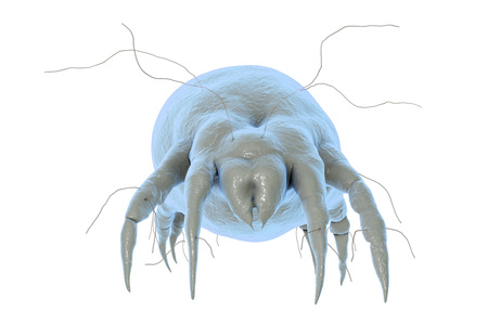 Dust mite Dermatophagoides which lives in dust and furniture and whose excrements cause allergic reaction and asthma, 3D illustration