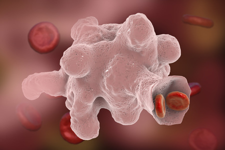 Entamoeba histolytica protozoan engulfing red blood cells. Parasite which causes amoebic dysentery and ulcers. It has ability to engulf red blood cells and is called erythrophage 3D illustration Stock Photo