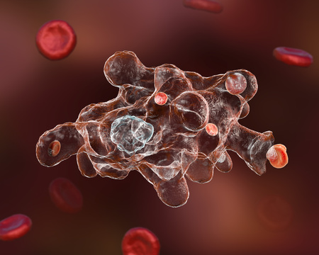 dysentery: Entamoeba histolytica protozoan engulfing red blood cells. Parasite which causes amoebic dysentery and ulcers. It has ability to engulf red blood cells and is called erythrophage 3D illustration Stock Photo