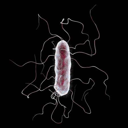 Proteus mirabilis bacterium isolated on black background, 3D illustration. Gram-negative bacterium with causes enteric, urinary and other infections