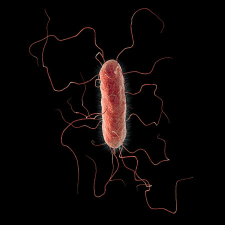 gram negative: Proteus vulgaris bacterium isolated on black background, 3D illustration. Gram-negative bacterium with causes enteric, urinary and other infections