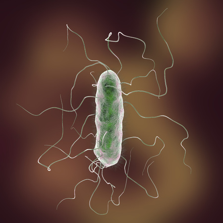 flagella: Proteus mirabilis bacterium, 3D illustration. Gram-negative bacterium with causes enteric, urinary and other infections