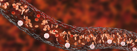 leukocyte: Blood vessel with flowing blood cells, side view, 3D illustration