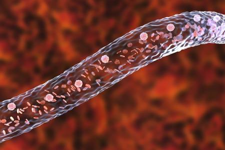 leukocyte: Blood vessel with flowing blood cells, side view, 3D illustration