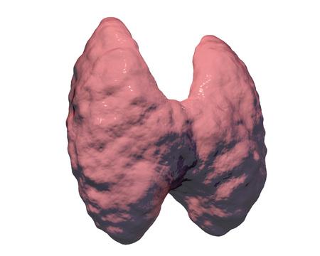 endocrinology: Thyroid gland isolated on white background, 3D illustration