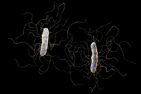 flagella: Clostridium difficile bacterium isolated on black background, 3D illustration. Bacteria which cause pseudomembraneous colitis and are associated with nosocomial antibiotic resistance