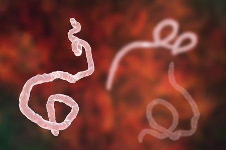 virus cell: Ebola viruses on colorful background, hemorrhagic fever virus. 3D illustration