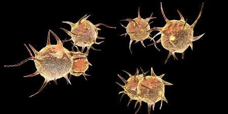 ameba: Parasites, pathogenic microbes isolated on black background. 3D illustration