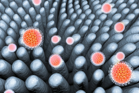 villi: Rotaviruses. infecting intestine. 3D illustration showing intestinal villi and multiple viruses Stock Photo