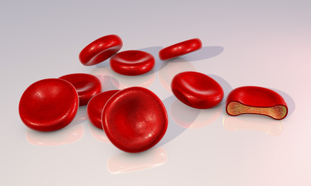 transverse: Red blood cells and transverse section of the cell. 3D illustration showing presence of hemoglobin solution inside erythrocyte