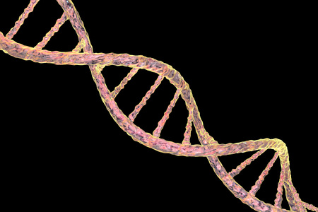 Double helix of DNA isolated on black background. 3D illustration Stock Photo