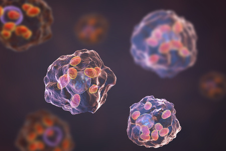 tropica: Macrophages infected by Leishmania amastigotes, 3D illustration