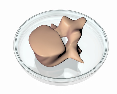 3D printed vertebra in Petri dish isolated on white background. Concept of bioprinting, 3D illustration