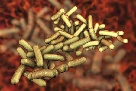 dysentery: Rod-shaped bacteria Shigella which cause food-borne infection shigellosis or dysnetery, 3D illustration