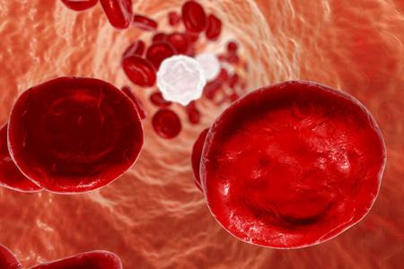 Inside blood vessel with red blood cells and leukocytes. 3D illustration