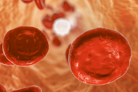 leukocyte: Inside blood vessel with red blood cells and leukocytes. 3D illustration
