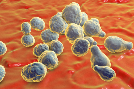 Pathogenic yeast fungus Cryptococcus neoformans which cryptococcal meningoencephalitis in patients with AIDS, 3D illustration