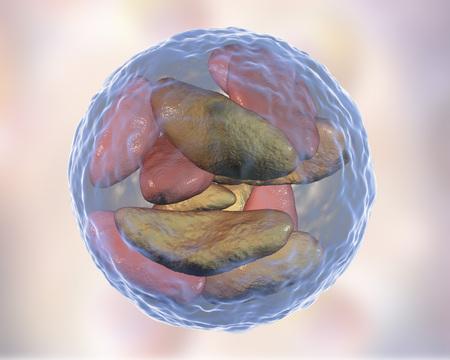 protozoan: Parasitic protozoans Toxoplasma gondii in bradyzoites stage inside tissue cyst, 3D illustration