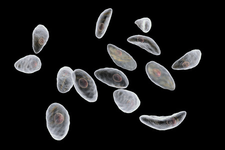 Parasitic protozoans Toxoplasma gondii which cause toxoplasmosis in tachyzoite stage isolated on black background, 3D illustration