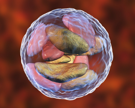 Parasitic protozoans Toxoplasma gondii in bradyzoites stage inside tissue cyst, 3D illustration