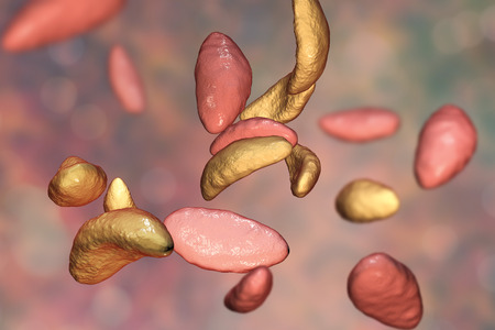 teratogenic: Parasitic protozoans Toxoplasma gondii which cause toxoplasmosis in tachyzoite stage, 3D illustration