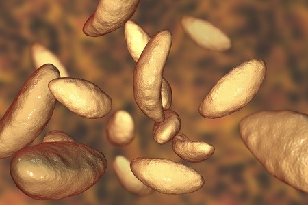 protozoan: Parasitic protozoans Toxoplasma gondii which cause toxoplasmosis in tachyzoite stage, 3D illustration