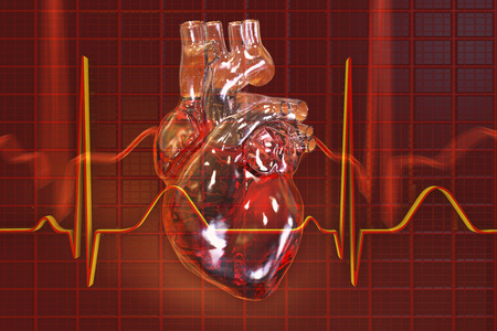 heart disease: Human heart on background with ECG, 3D illustration
