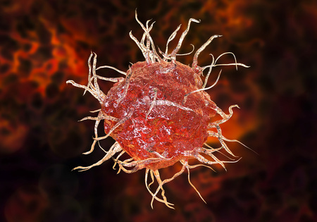 Dendritic cell, antigen-presenting immune cell, 3D illustration