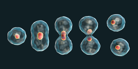Division of a cell, mitosis concept, 3D illustration Banco de Imagens