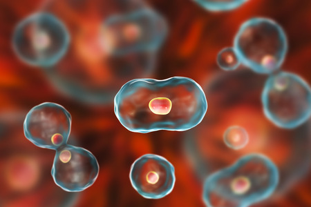 cytokinesis: Dividing cells on colorful background, 3D illustration Stock Photo