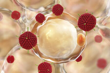 Adenoviruses and fat cells, conceptual image, 3D illustration. Adenovirus 36 is supposed to be the etiological factor of obesity Standard-Bild