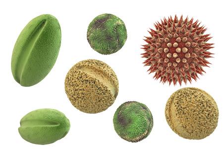 Stuifmeelkorrels van verschillende planten, 3D illustratie. Het zijn factoren die hooikoorts en allergische rhinitis veroorzaken