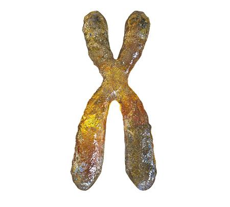 Human chromosome isolated on white background, 3D illustration Stock Photo