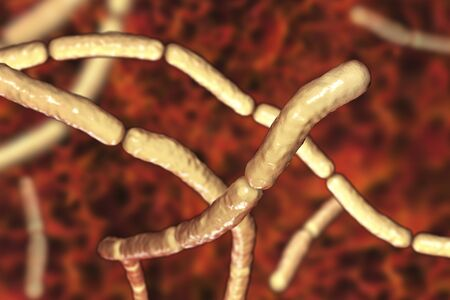 Bacillus subtilis, gram-positive bacteria, non-pathogenic for humans, used as fungicides on plants and in biotechnology for antibiotic production. 3D illustration Stock Photo