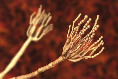 Schimmels Penicillium die voedselbederf veroorzaken en worden gebruikt voor de productie van het eerste antibioticum penicilline. 3D illustratie die sporenconidia en conidiophore toont