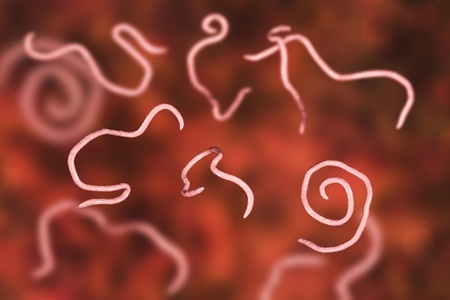 Helminths nematodes Enterobius Threadworm which cause enterobiasis, 3D illustration Stock Photo