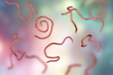 Nematodi di Helminths Enterobius Threadworm che causano l'enterobiasi, illustrazione 3D Archivio Fotografico - 88032825