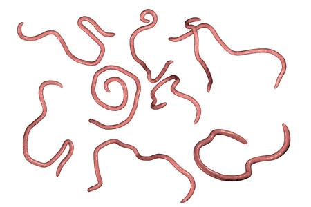 Helminths nematoden Enterobius Draadworm die enterobiasis veroorzaken, 3D-afbeelding Stockfoto - 88032845