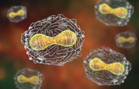 Virus Variola, un virus della famiglia Orthopoxviridae che causa il vaiolo, malattia altamente contagiosa sradicata dalla vaccinazione, illustrazione 3D Archivio Fotografico - 89811482